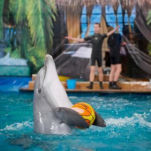 Дельфинарии, океанариумы Краснодара