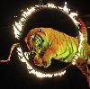 Цирки в Краснодаре