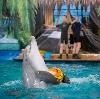 Дельфинарии, океанариумы в Краснодаре