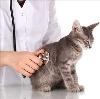 Ветеринарные клиники в Краснодаре